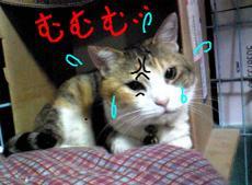 Image082srakugaki_3