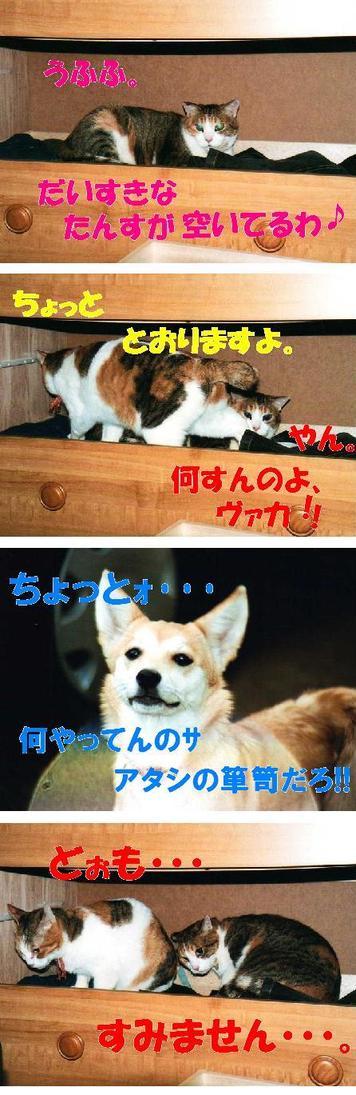 Tansudaisuki